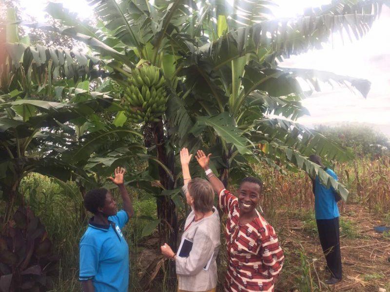 Akol's banana crop!